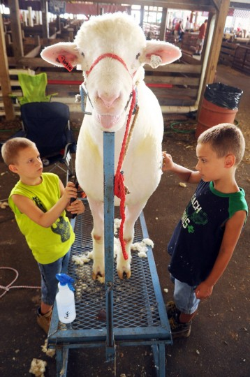 Day 3: Wyatt Carter, 7, left, and his brother Ed Johnson, 8, both of Mt. Airy trim the coat of a Dorset ram from Maplewood Farm in Woodbine prior to a show. (Brian Krista/Patuxent Homestead)