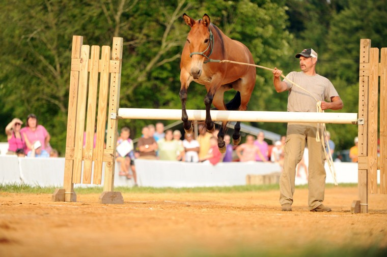 "Day 4: Jim Schulze of Woodbine leads his 9-year-old mule ""Jenny"" over the fence on their way to winning the under 54-inch class of the coon mule jumping competition. (Brian Krista/Patuxent Homestead)"