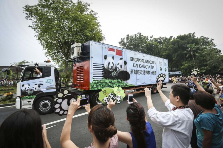 Members of the public cheer as the refrigerated truck carrying the two giant pandas, Kai Kai and Jia Jia arrives at the Singapore Zoo. Kai Kai and Jia Jia are on loan for 10 years, as part of a deal done between the China Wildlife Conservation Association and Wildlife Reserve Singapore. The Pandas will be kept in quarantine for one month before being released into their climate-controlled exhibit. The pandas will be on display for public viewing from December. (Chris McGrath/Getty Images)