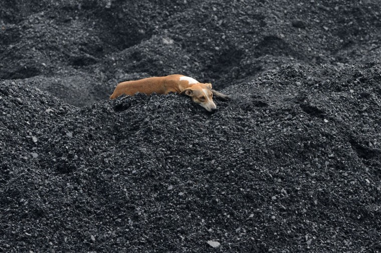 A dog relaxes on a heap of coal at the Kankaria Railway Yard in Ahmedabad on September 5, 2012. Indian police on September 4 opened a probe into five coal companies after raiding premises across the country over the alleged misallocation of lucrative mining rights. (Sam Panthaky/AFP photo)