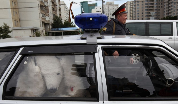 A Greenpeace activist dressed as polar bear sits in a police car in Moscow, on September 5, 2012, after he was detained during a protest against oil drilling in the Arctic outside the energy giant Gazprom headquarters. Greenpeace is carrying out a high-profile campaign against plans to drill for oil in the pristine Arctic that targets Gazprom as well as Western oil companies including Shell and Exxon. (Denis Sinyakov/AFP Photo)