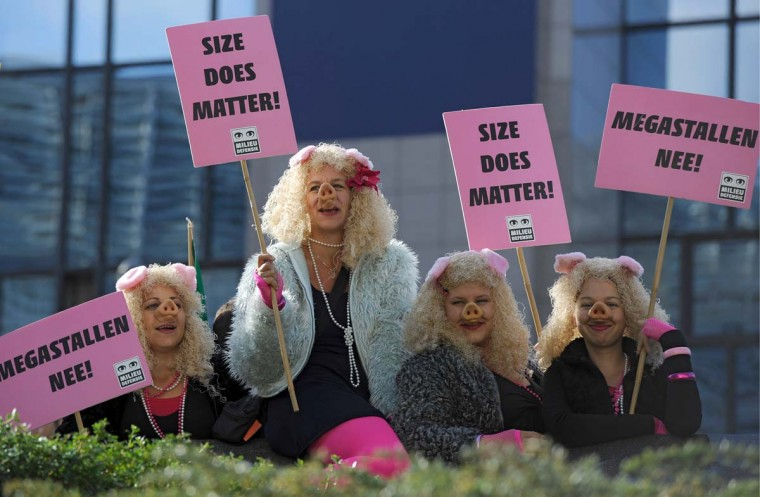 Demonstrators disguised as pigs and holding banners stand during a protest for calling for radical farming reform outside the EU headquarters in Brussels . (John Thys/Getty Images)