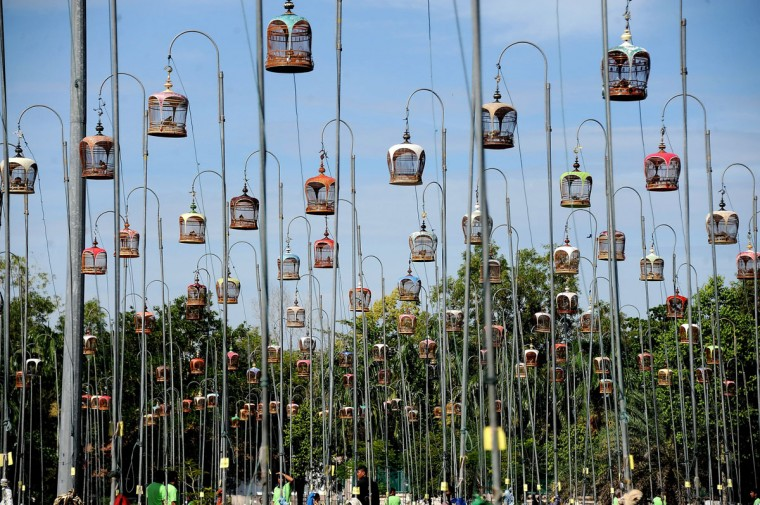 Birds sit in their cages during a bird-singing contest in Thailand's southern province of Narathiwat on September 24, 2012. Hundreds of bird owners from Thailand, Malaysia and Singapore take part in the contest. (Madaree Tohlala/AFP/Getty Images)