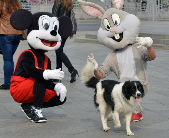 Street photographer assistants wearing popular cartoon costumes try to pat a dog in the center of Ukrainian capital of Kiev. (Sergei Supinsky/AFP/Getty Images)