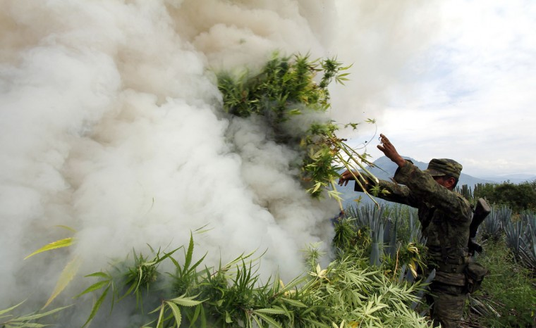 Mexican soldiers burn marijuana plants found amid a field of blue agave - the plant used for the production of tequila - in El Llano, Hostotipaquillo, Jalisco State, Mexico on September 27, 2012. Members of the Mexican military conducted an operation in the area where so far they have destroyed 40 hectares of marijuana plantations and burned more than 50 tons of plants. (Hector Guerrero/AFP/Getty Images)