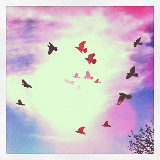 Fly Fly Away: Every weekend, @instagram announces a Weekend Hashtag Project, where they announce a theme with a hashtag. Users then tag any pictures they take over the weekend that match the concept. This one was #flyflyaway. This photo was nowhere near as good as most of the others, but I love the way it came out anyway. (Credit: Devon Doane)