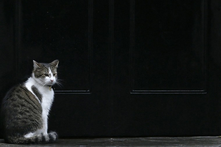 Larry, the Downing Street cat, waits to be allowed back into number 10 during a rainy day in London September 24, 2012. (Stefan Wermuth/Reuters)