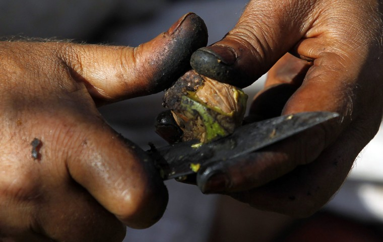 A Kashmiri farmer removes the outer shell of a walnut with the help of a knife during a drying process in Srinagar. Walnuts are grown in large quantities and are sold from 100 Rupees ($1.87) to 300 Rupees ($5.61) per kilogram in Kashmir, farmers said. (Fayaz Kabli/Reuters)