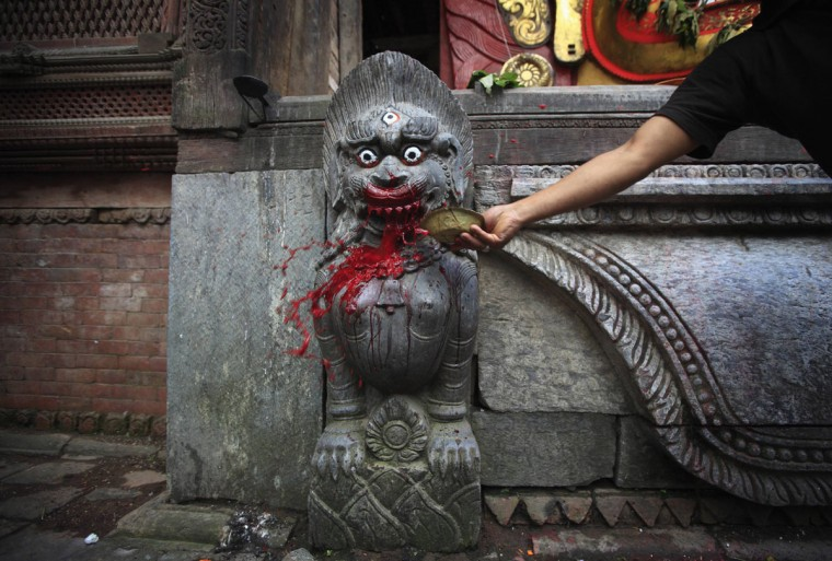 A devotee offers blood to a lioness god idol after sacrificing a water buffalo, during the Indra Jatra Festival in Kathmandu September 27, 2012. The annual festival, named after Indra, the god of rain and heaven, is celebrated by worshipping, rejoicing, singing, dancing and feasting in Kathmandu Valley to mark the end of monsoon season. (Navesh Chitrakar/Reuters)