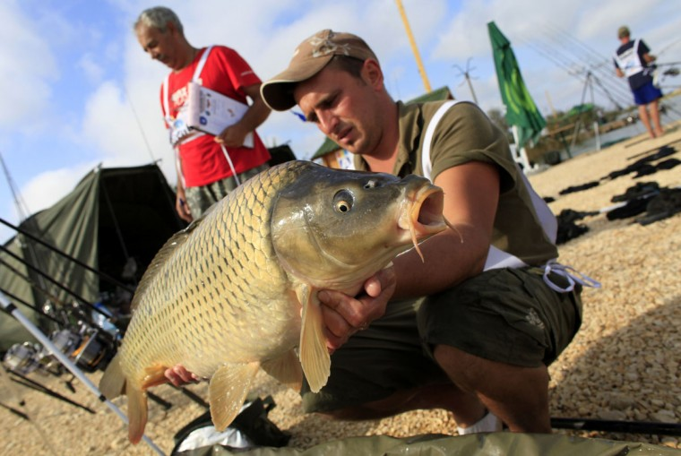 A 6.73 kg carp is held by Tony Darnand of France during the 14th Carpfishing World Championship in Corbu village, Romania. (Radu Sigheti/Reuters)