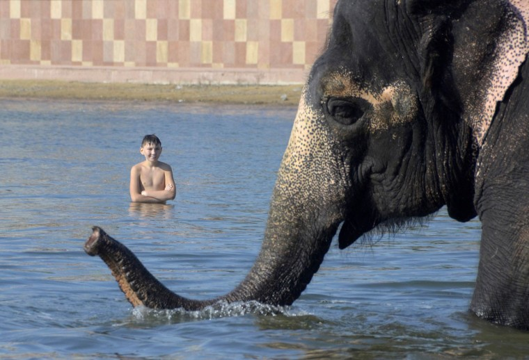 A boy looks at an elephant from a touring circus bathing in the harbour of the Russian far-eastern city of Vladivostok. (Yuri Maltsev/Reuters)