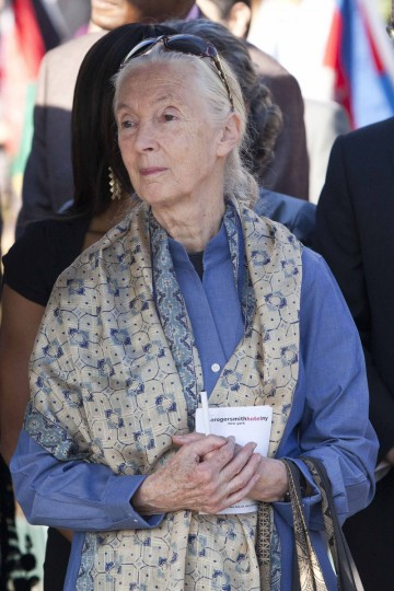 U.N. Messenger of Peace and primatologist Jane Goodall attends a ceremony to commemorate International Peace Day at the United Nations in New York. (Andrew Burton/Reuters)