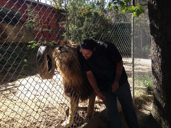 Lion Rub : Stanton, Missouri (Courtesy of Freak Flag America)