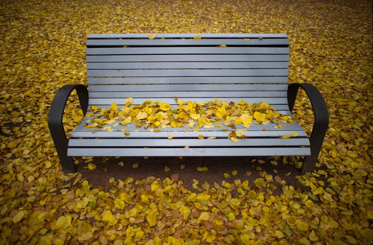 Autumn leaves cover a park bench in Dresden, eastern Germany. (Arno Burgi/Getty Images)
