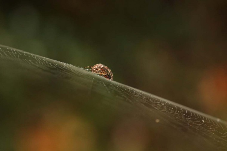 A spider devours an insect caught in its web on October 22, 2012 in London, England. (Oli Scarff/Getty Images)