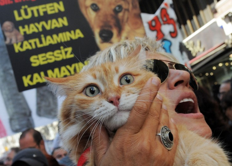 A Turkish woman holds her cat in front of a banner on September 30, 2012 during a march for animal rights on Istiklal Avenue in Istanbul. Demonstrators gathered against a proposed amendment to Law No. 5199 on the protection of animals. The new draft, which is slated to be discussed in Parliament by late October, authorizes the removal of stray animals, limiting the number of pets in houses and the termination of what is termed dangerous breeds. (Bulent Kilic/AFP/Getty Images)