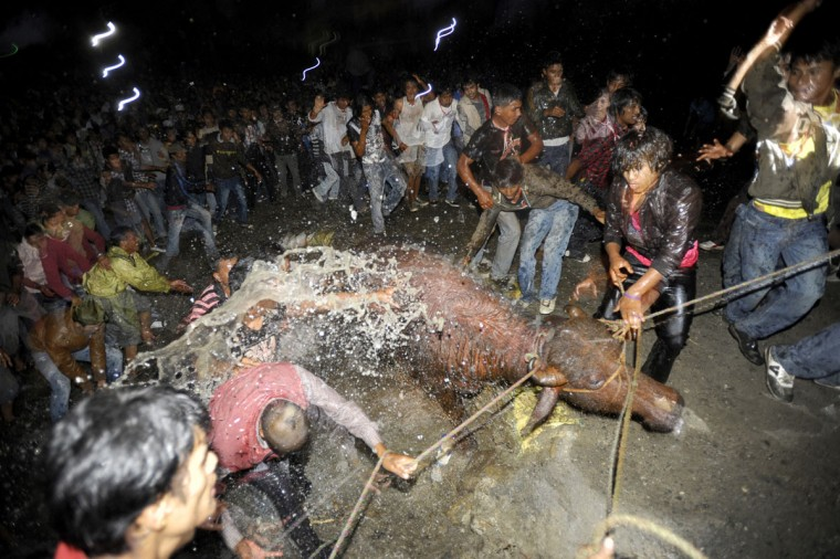 Nepalese bystanders watch as other devotees splash water on a buffalo to be sacrificed during the ninth day of the Hindu Dashain Festival in Bhaktapur on the outskirts of Kathmandu. Dashain is the longest and the most auspicious festival in the Nepalese calendar and celebrates the triumph of good over evil. (Prakash Mathema/AFP/Getty Images)
