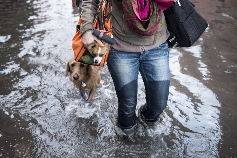 Blaine Badick walks through flood waters with her dogs while leaving home October 31, 2012 in Hoboken, New Jersey. (Brendan Smialowski/AFP/Getty Images)