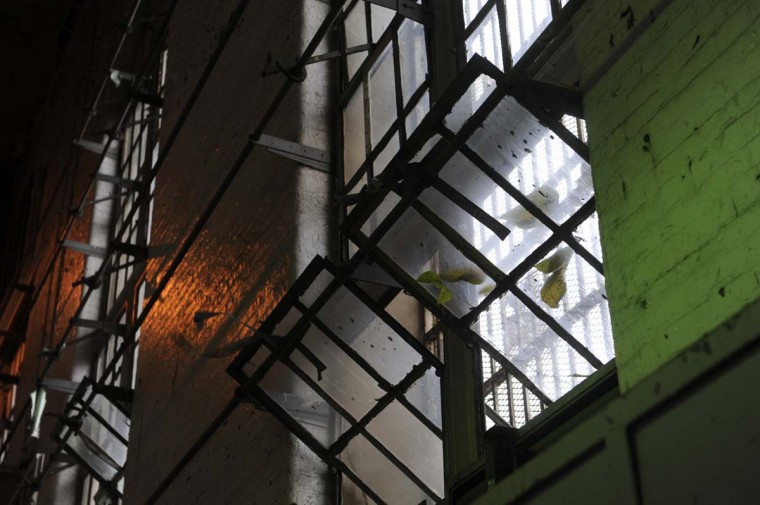 A plant grows near an open window at the Maryland House of Correction, which is now empty and is gradually being taken apart. (Barbara Haddock Taylor/Baltimore Sun)
