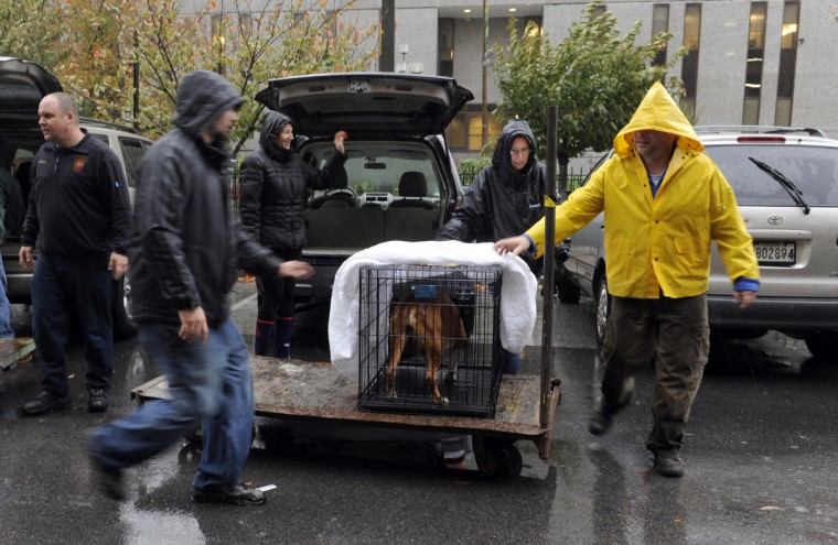Volunteers from BARCS move evacuated shelter animals into the First Mariner Arena as Hurricane Sandy moves into the city. (Barbara Haddock Taylor/Baltimore Sun)