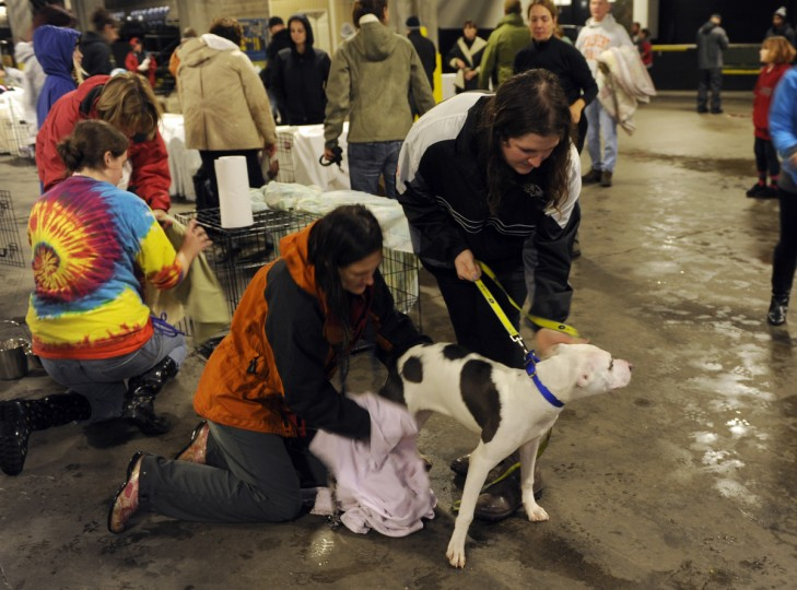 BARCS volunteers Jennifer Linder, left, and Lindsay Quinn, both of Baltimore, use a towel to dry a dog which was evacuated from the shelter as Hurricane Sandy moves into the city. They are at the First Mariner Arena loading dock. (Barbara Haddock Taylor/Baltimore Sun)