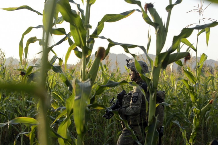 U.S. army soldier SGT Matthew Spiller of 2nd Battalion, 1st Infantry Regiment, stands guard in a corn field during a joint U.S.-Afghan military clearing operations in Nagahan district in Kandahar province, southern Afghanistan. (Erik De Castro/Reuters)