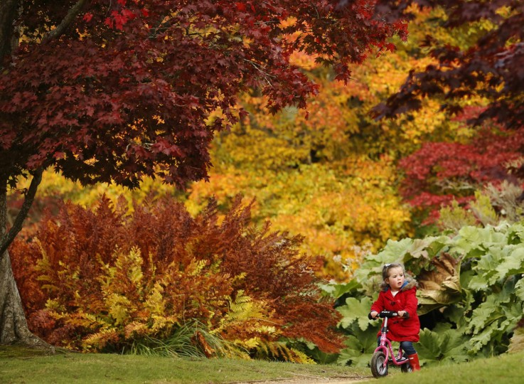 Three year-old Annie Wood rides her scooter in front of changing autumn leaves in Sheffield Park Gardens near Haywards Heath in southern England. (Luke MacGregor/Reuters)