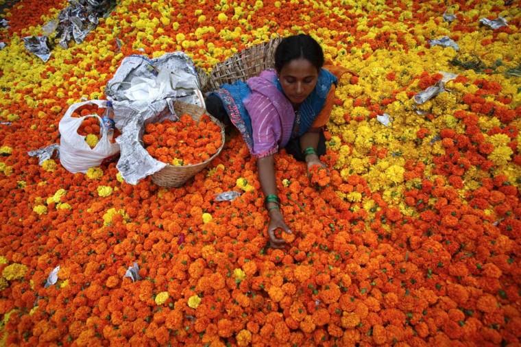 A woman sorts through marigolds at a flower market in Mumbai. (Vivek Prakash/Reuters photo)