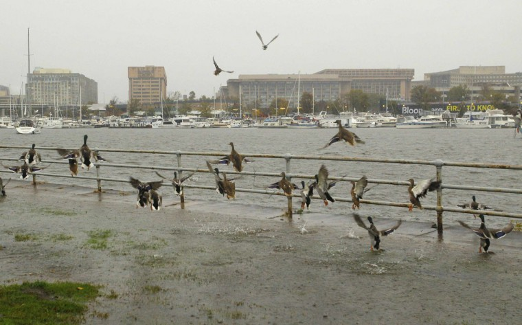 October 29, 2012: Ducks takes flight on an overlapping sea wall on the Potomac River in Washington. (Gary Cameron/Reuters)