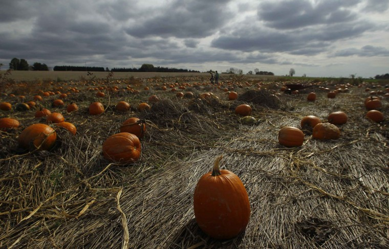Pumpkins are seen under dark skies in a field at Mayne's Tree Farm in Buckeystown, Maryland, as Hurricane Sandy closes in on the eastern United States. (Gary Cameron/Reuters)