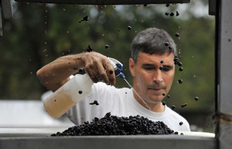 Ed Boyce, co-owner of Black Ankle Vineyards, sprays sulfite on Cabernet Sauvignon grapes to absorb oxygen as they fall from the crusher. (Kim Hairston/Baltimore Sun)