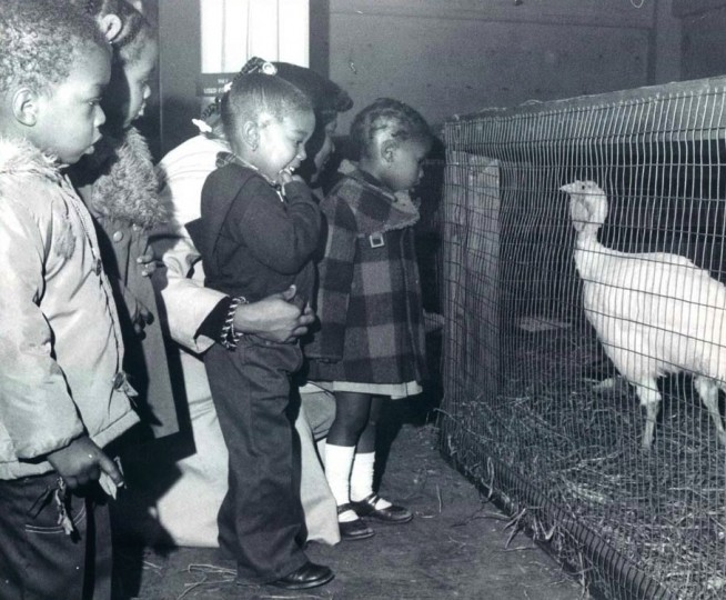 1978: A group of Baltimore youngsters pay a visit to a turkey during Lexington Market's Downtown Country Fair. (Clarence B. Garrett/Baltimore Sun)