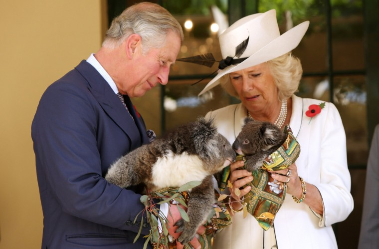 Camilla, Duchess of Cornwall and Prince Charles, Prince of Wales hold koalas at Government House in Adelaide, Australia. The Royal couple are in Australia on the second leg of a Diamond Jubilee Tour taking in Papua New Guinea, Australia and New Zealand. (Morne de Klerk/Getty Images)