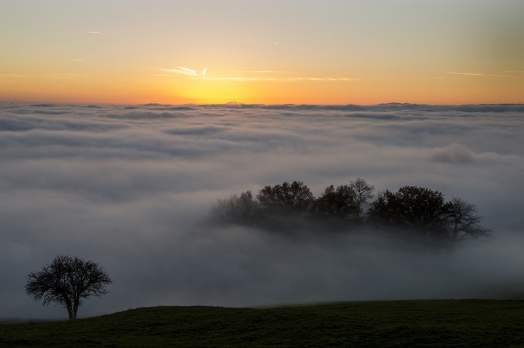 Trees are seen at sunset surrounded by heavy fog hanging above Lake Geneva above Riex near Lausanne, western Switzerland. (Fabrice Coffrini/Getty Images)