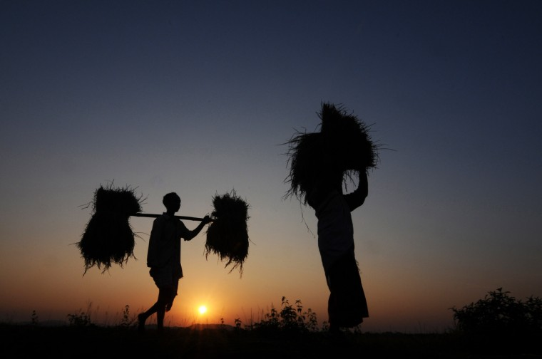 Indian farmer Lala Rabha (L), 37, and his wife carry rice harvest at Daranggiri village, some 100km west of Guwahati on November 23, 2012. The United Nations Food and Agriculture Organization(FAO) has revised upwards India's rice production to 100 million tons (MT) in the 2012-13 crop year on the back of revival of rains in August and September. (Biju Boro/Getty Images)