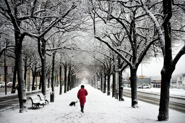 A woman walks her dog on November 29, 2012 at snow covered street in central Stockholm. (Jessica Gow/Getty Images)