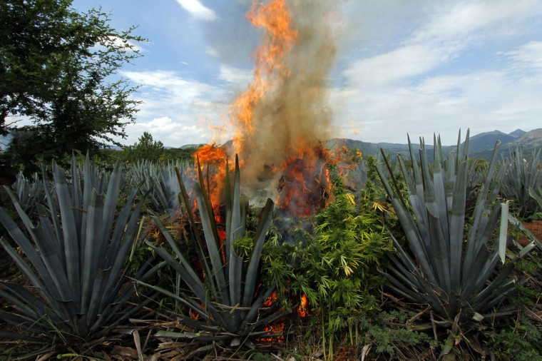 September 27, 2012: Mexican soldiers burn marijuana plants found amid a field of blue agave - the plant used for the production of tequila - in El Llano, Hostotipaquillo, Jalisco State, Mexico. (Hector Guerrero/AFP/Getty Images)