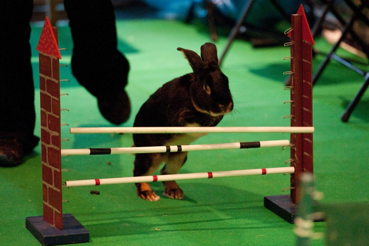 A rabbit jumps at the Pet Fair in Berlin. The Pet Fair will be held on November 2- 4. (Robert Schlesinger/AFP/Getty Images)