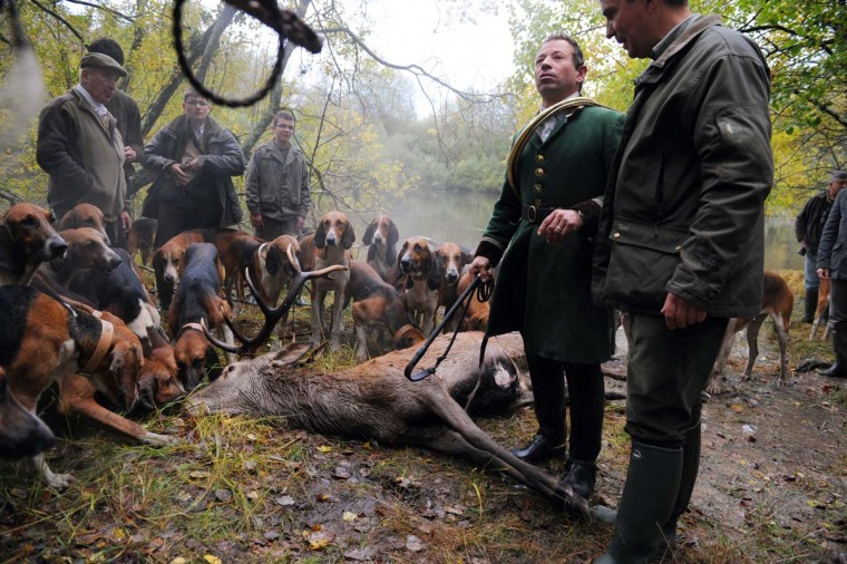 The pack gathers near a dead stag caught during a stag-hunting, on November 3, 2012 in Amboise. (Alain Jocard/AFP/Getty Images)