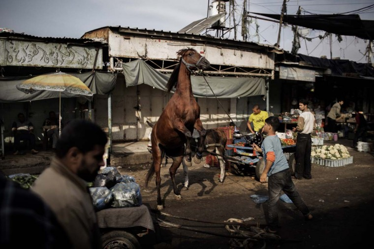 A Palestinian boy tends to his horse at the central market in Gaza City on November 19, 2012. Food prices have started to rise due to lack of fresh supplies due to ongoing unrest with Israel, as scarce produce is met with more demands by the residents of the Palestinian coastal enclave. (Marco Longari/AFP/Getty Images)