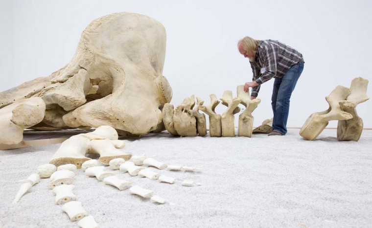 Taxidermist Werner Beckmann poses with a pot whale skeleton at the Natural History Museum in Muenster, northern Germany, on November 26, 2012. The whale stranded a year ago on the German island Pellworm. (Friso Gentsch/AFP/Getty Images)