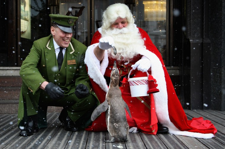 Santa feeds Smiley the penguin as they help open Harrods Christmas World during a photocall on August 4, 2009 in London, England. (Chris Jackson/Getty Images)