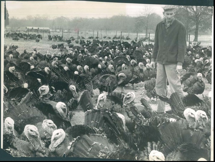 1959: Farmer with turkeys. (Joe Di Paola/Baltimore Sun)
