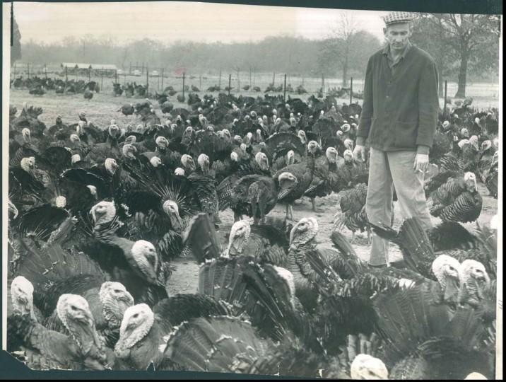 1959: Farmer with turkeys. (Joe Di Paola/Baltimore Sun)
