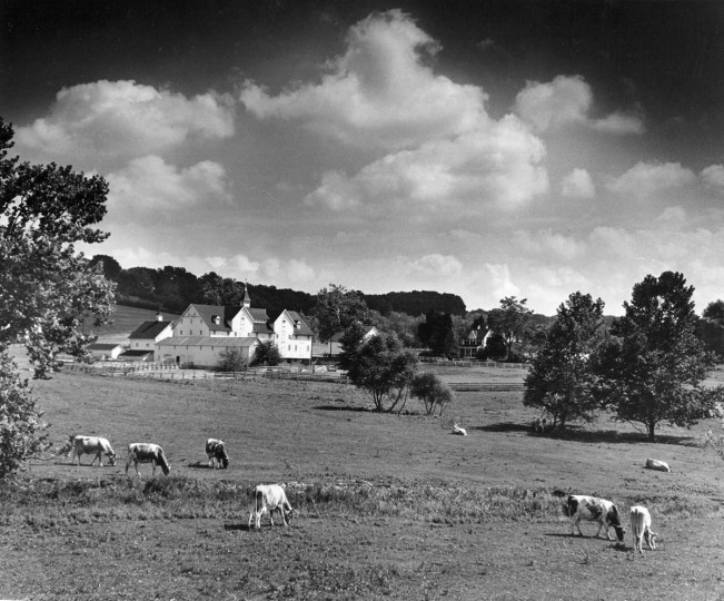 A photograph of a dairy farm located on Seminary Road takenn in June of 1963. (Robert F. Kniesche/Baltimore Sun)