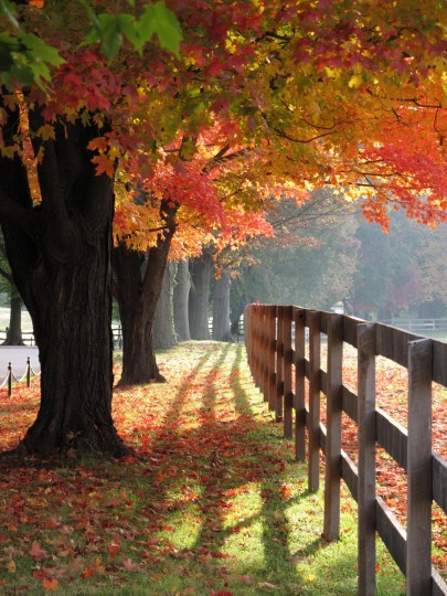 "Karen Mallonee is the winner for this week's Reader SunShots series ""Fall Foliage"" for her photo of the maple trees at Garrison School in mid-October. She used a Canon G10 to capture the scene. Here is a critique from Baltimore Sun photo editor Jerry Jackson: ""Karen made great use of the early morning light. By shooting with the sunlight coming in from the side, filtering through layers of foliage, she was able to show a broad range of color and give the image depth."""