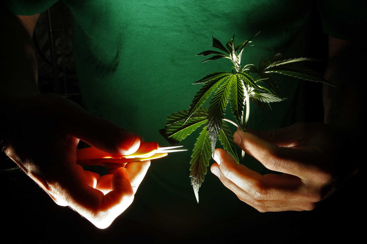 Marijuana 2012: Puffing, prescribing and prosecuting pot in print