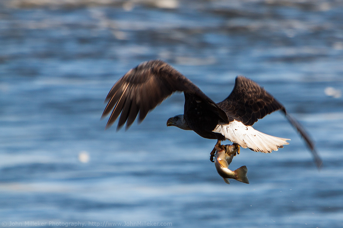 conowingo chat Conowingo bald eagles 17k likes a facebook page where bald eagle lovers (photographers & visitors) can view information about the bald eagle activity.