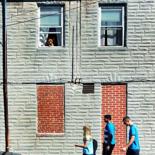 bailey+the blue crew – I went across the street from my apartment to take a photo of Bailey chillin out the window and three people, all wearing blue shirts, happened to walk by. I love the interaction between him and the girl in the front, makes the photo for me. (Credit: Josh Flynn)