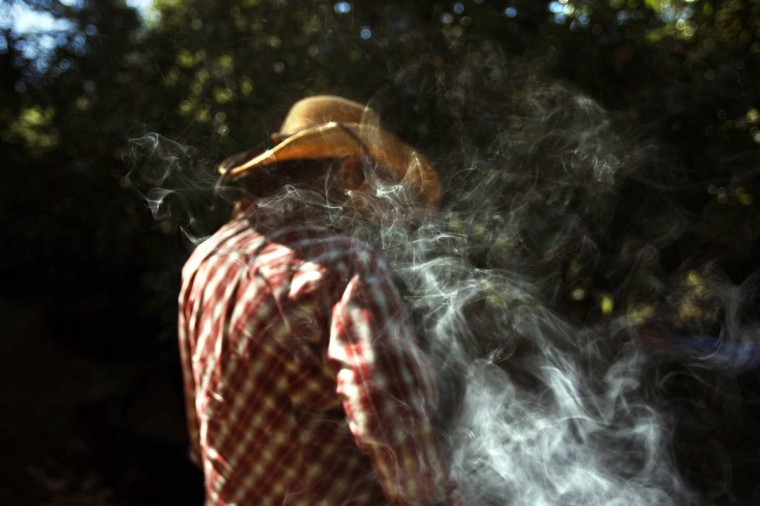 May 15, 2012: Smoke billows around the head of longtime marijuana grower Anna who tokes on a joint while planting this year's first garden of marijuana on a small terraced slope near her home in northern Mendocino, California. The medical pot boom is upending the old order of the Emerald Triangle on many fronts and has made it harder for growers like Anna and her husband Andrew, to make a profit. (Genaro Molina/Los Angeles Times/MCT)